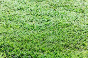 Local Zoysia Grass Supplier and Installer North Richland Hills, TX