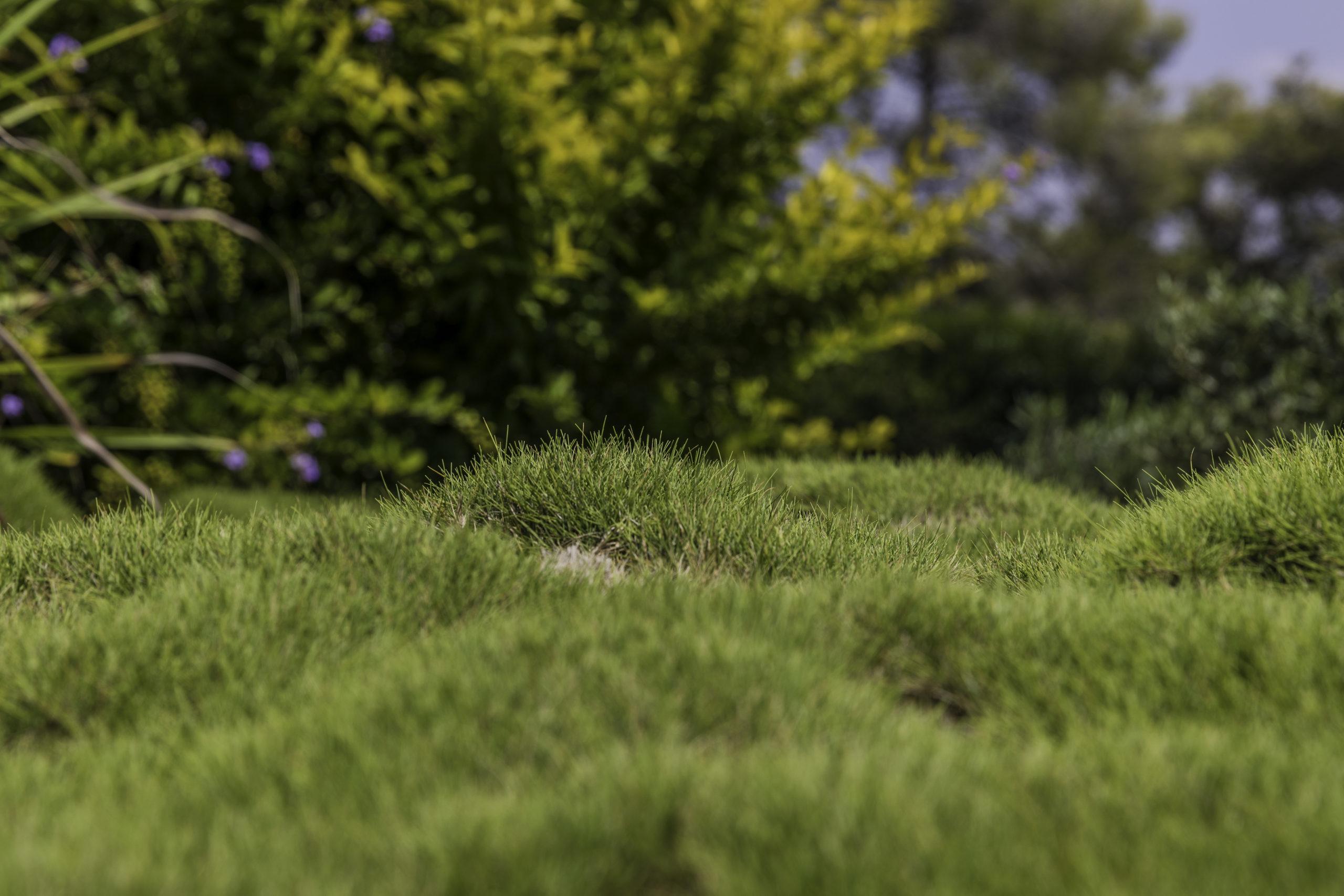 Local Zoysia Grass Supplier and Installer Southlake