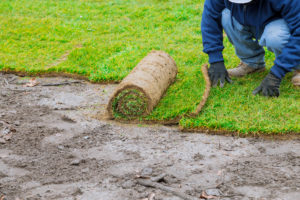 Local Zoysia Grass Sod Installer Little Elm, TX