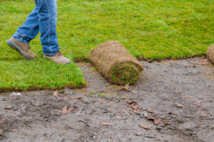 Local Zoysia Grass Sod Installer Richardson, TX