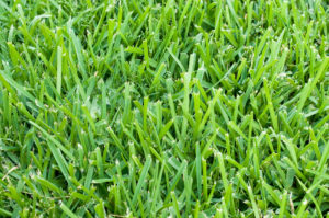 Local Zoysia Grass Sod Installer Farmers Branch