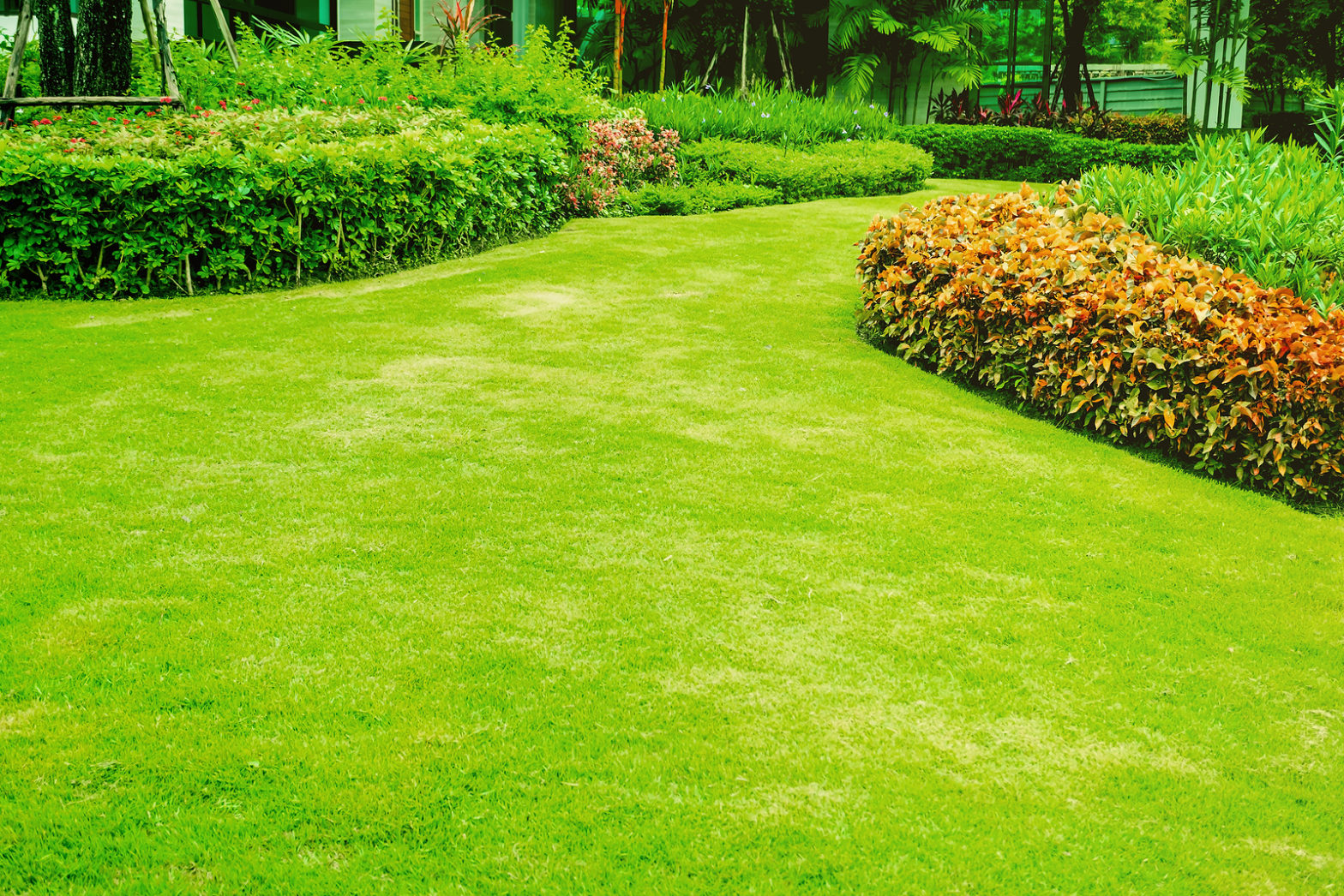 Take Care of a Shady Lawn